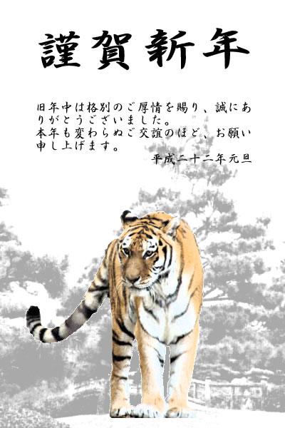 松の木と立った虎の年賀状の拡大写真